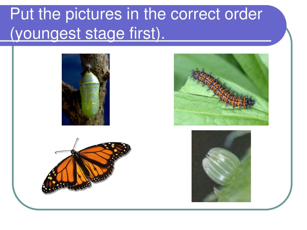 Put the pictures in the correct order (youngest stage first).