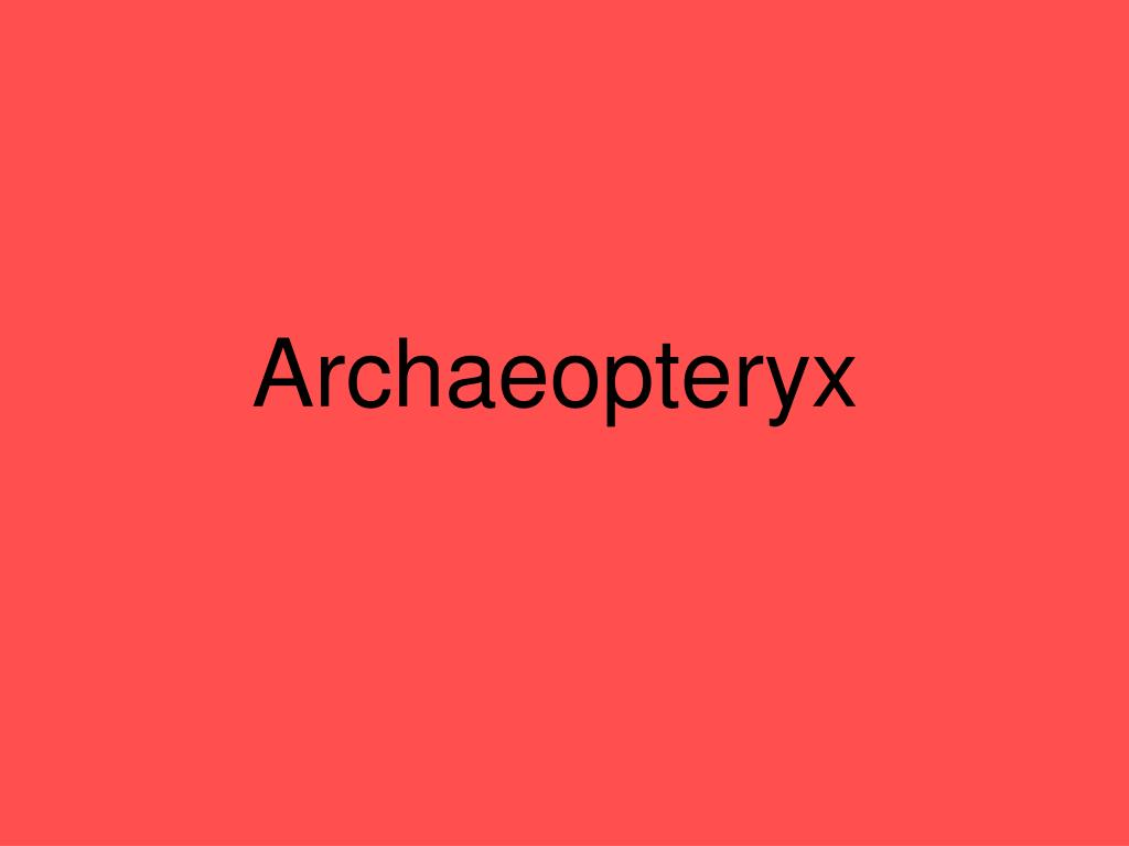 archaeopteryx l.