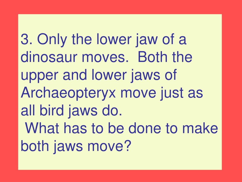 3. Only the lower jaw of a dinosaur moves.  Both the upper and lower jaws of Archaeopteryx move just as all bird jaws do.