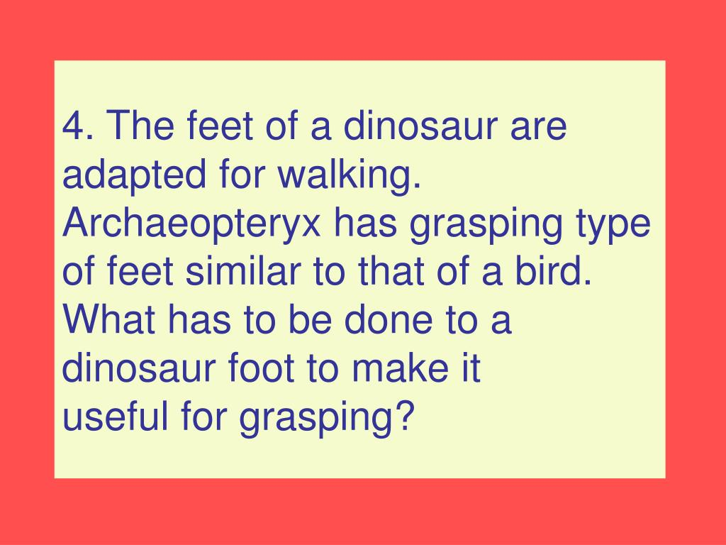 4. The feet of a dinosaur are adapted for walking.  Archaeopteryx has grasping type of feet similar to that of a bird.
