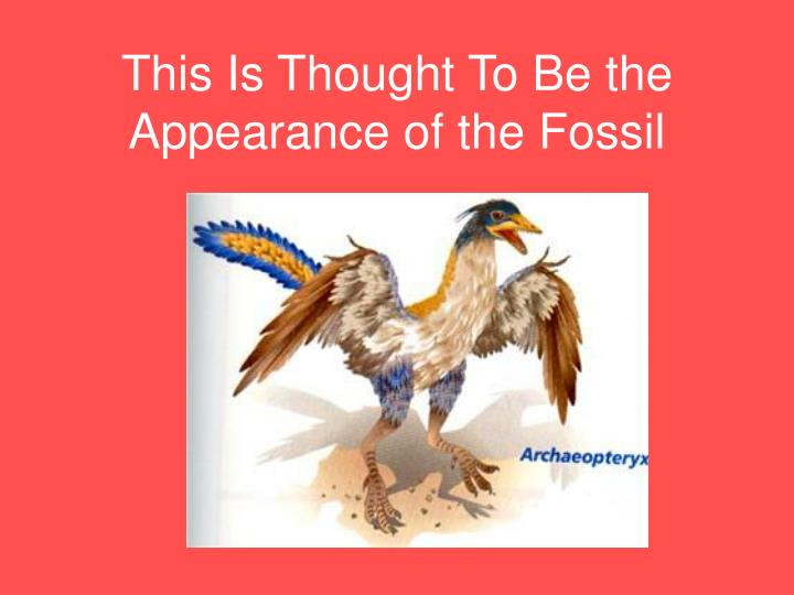This is thought to be the appearance of the fossil
