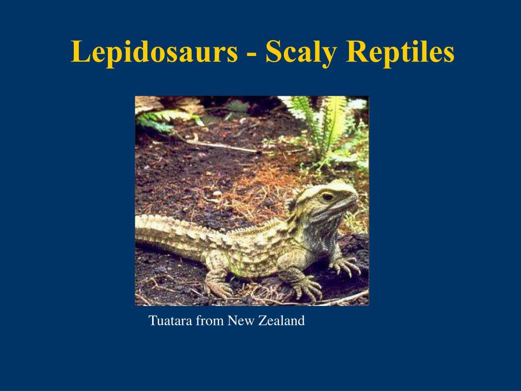 Lepidosaurs - Scaly Reptiles