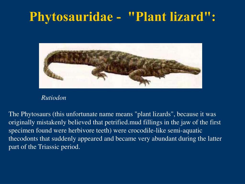 Phytosauridae -