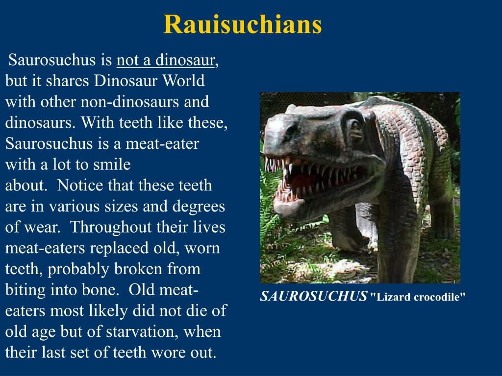 Rauisuchians