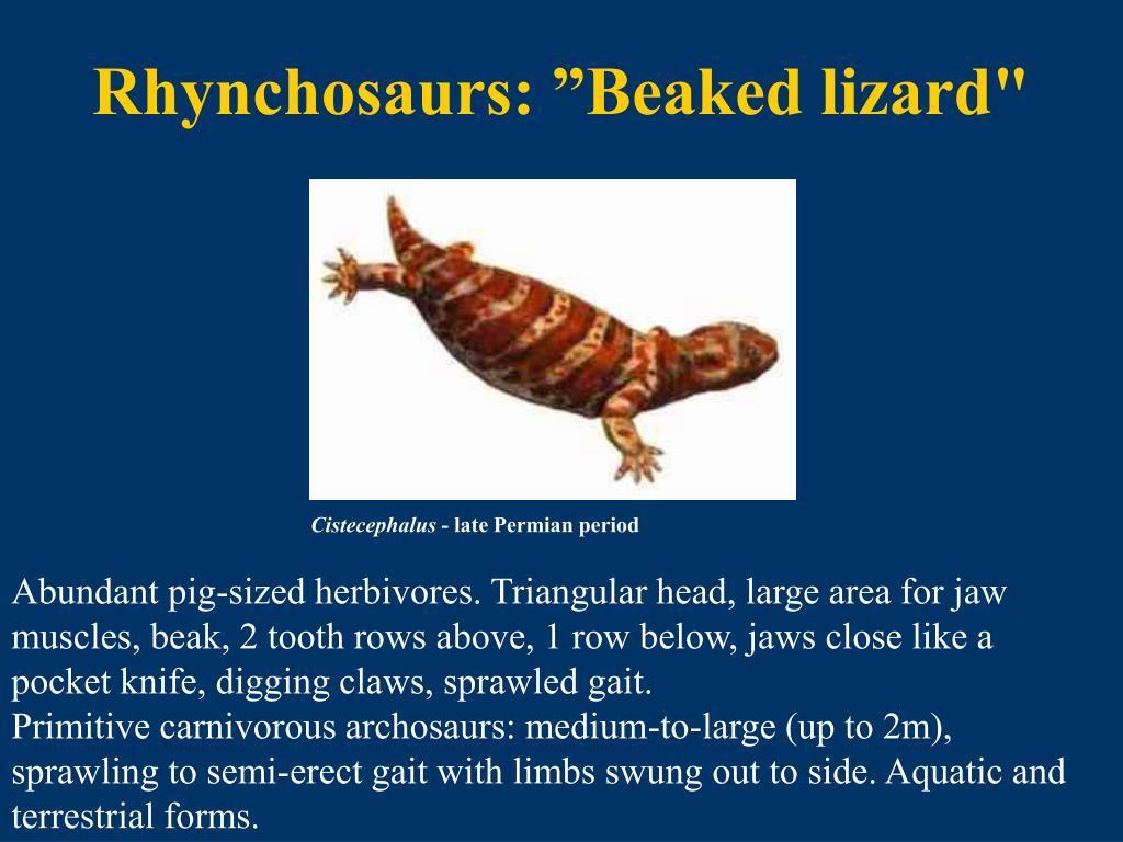 """Rhynchosaurs: """"Beaked lizard"""""""