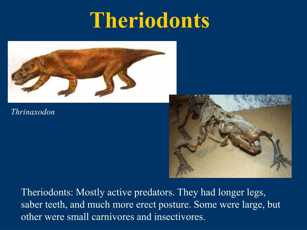 Theriodonts