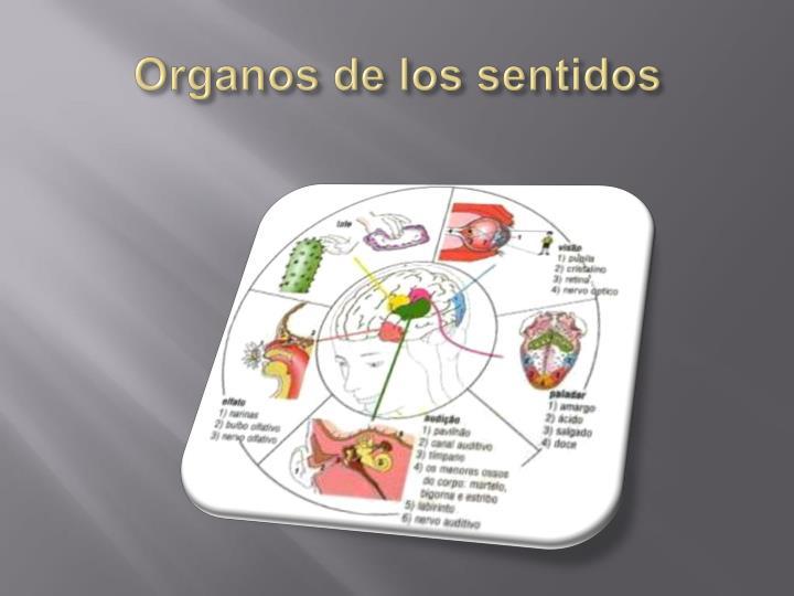 Organos