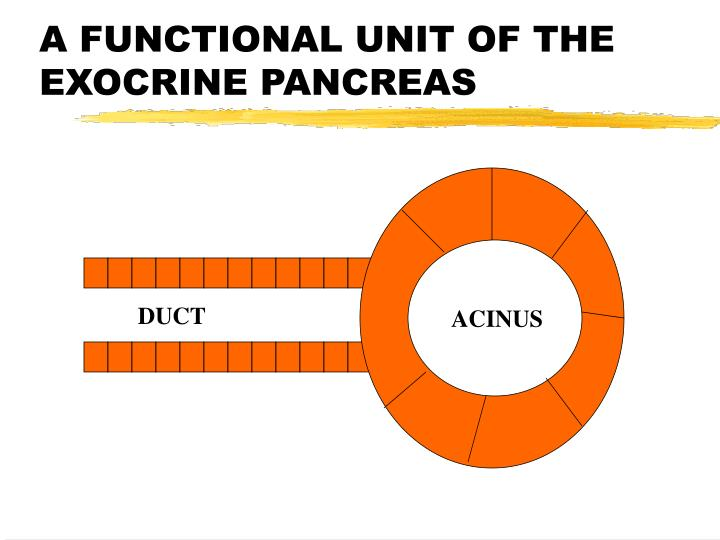 A FUNCTIONAL UNIT OF THE EXOCRINE PANCREAS