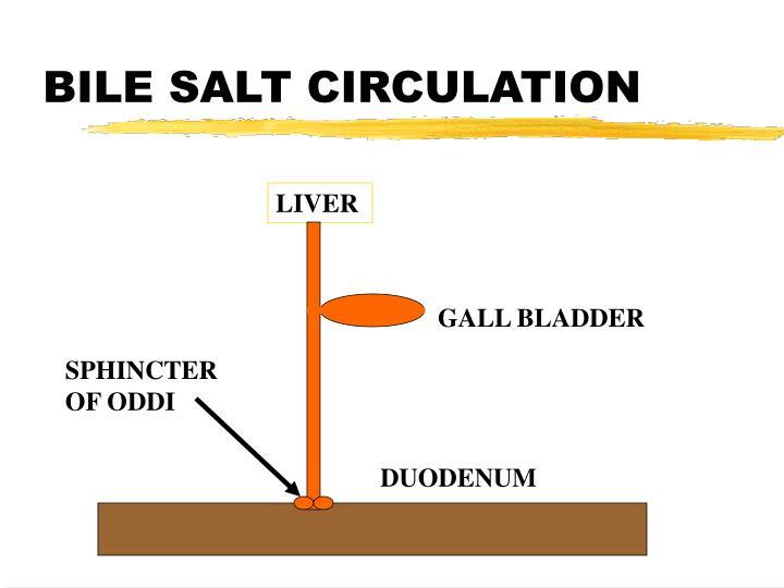 BILE SALT CIRCULATION