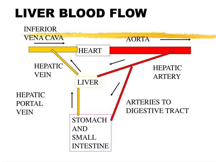 LIVER BLOOD FLOW