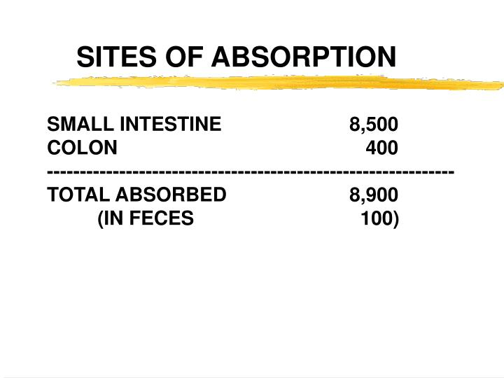 SITES OF ABSORPTION