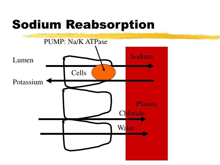 Sodium Reabsorption