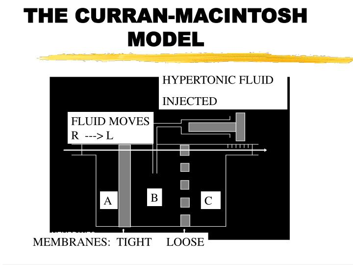 THE CURRAN-MACINTOSH MODEL