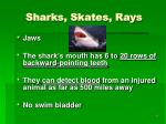 sharks skates rays