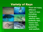 variety of rays