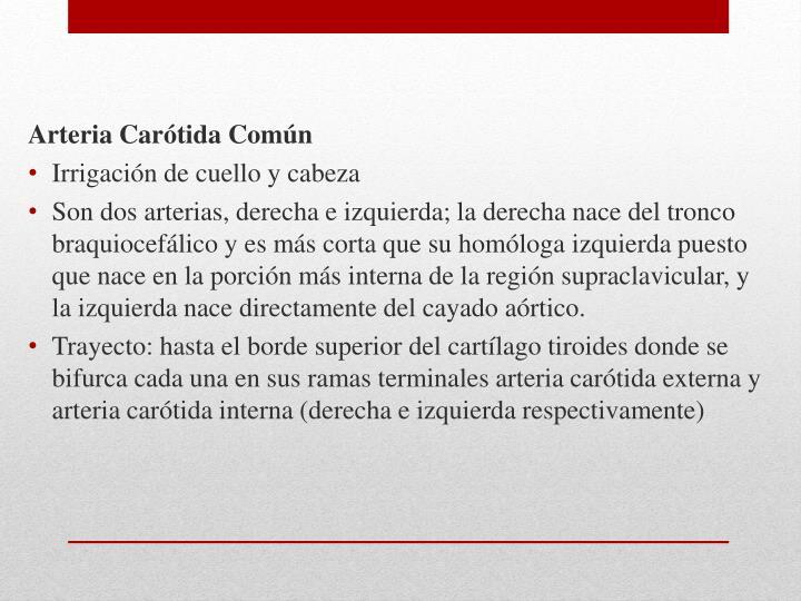 Arteria Carótida Común