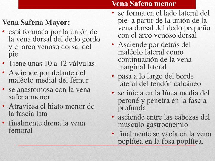 Vena Safena Mayor:
