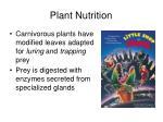 plant nutrition12