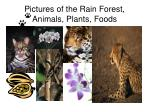 pictures of the rain forest animals plants foods