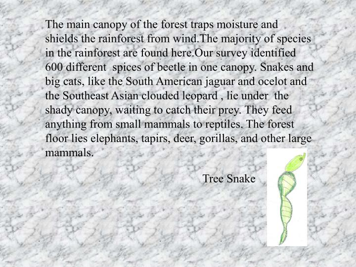 The main canopy of the forest traps moisture and shields the rainforest from wind.The majority of sp...