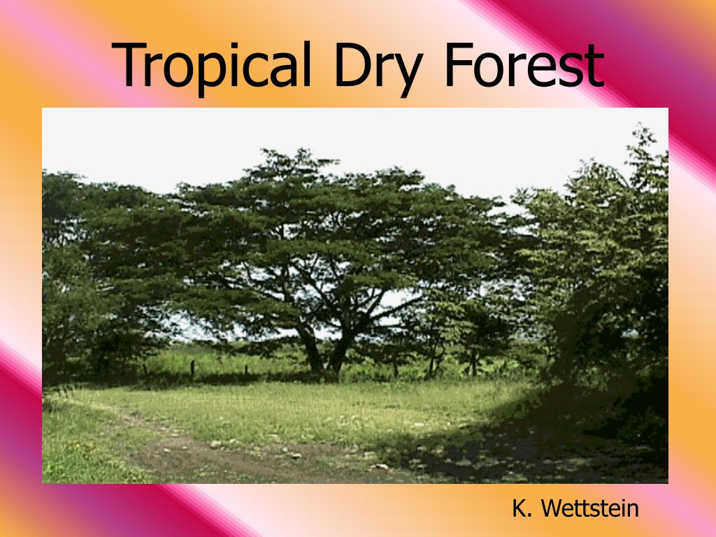 tropical dry forest l.
