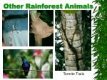 other rainforest animals
