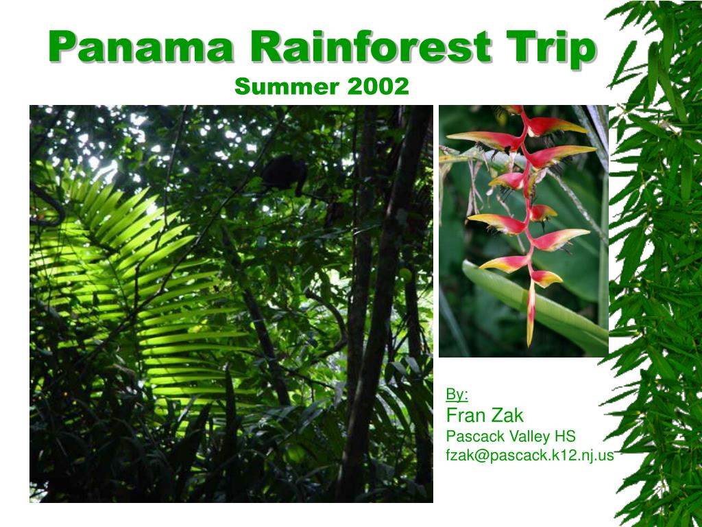 panama rainforest trip summer 2002 l.