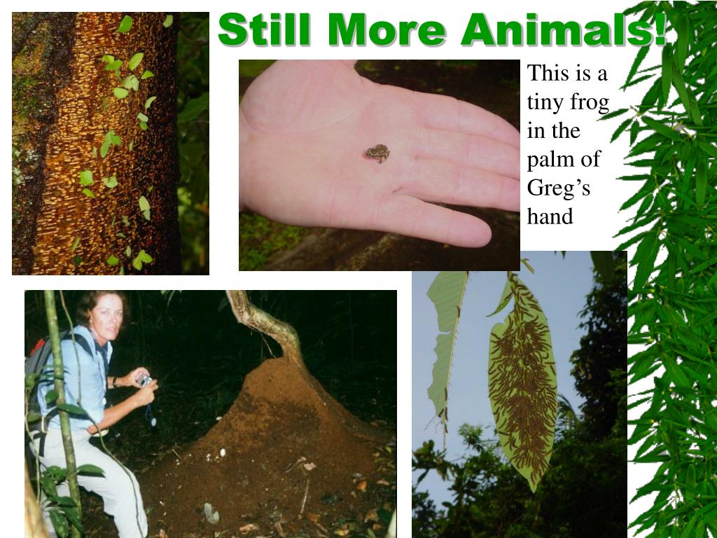 Still More Animals!