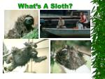 what s a sloth