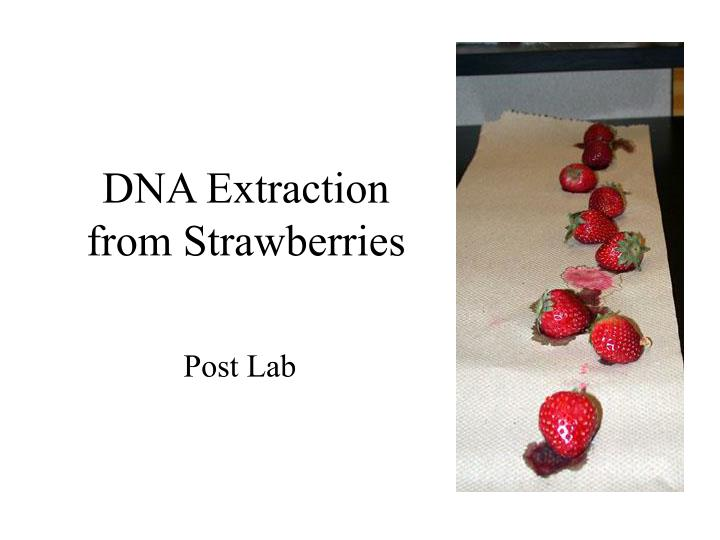 strawberry dna extraction and quantitative hypothesis