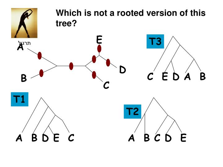 Which is not a rooted version of this tree?