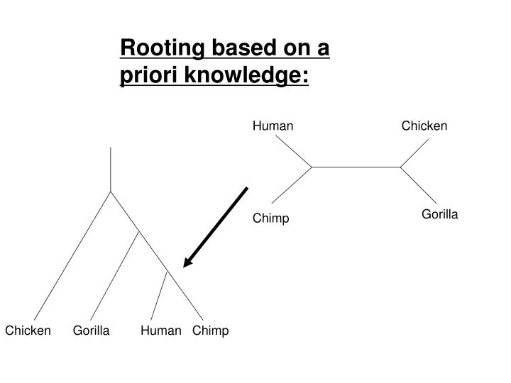 Rooting based on a priori knowledge: