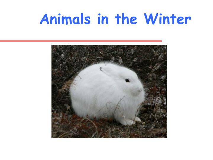 animals in the winter n.