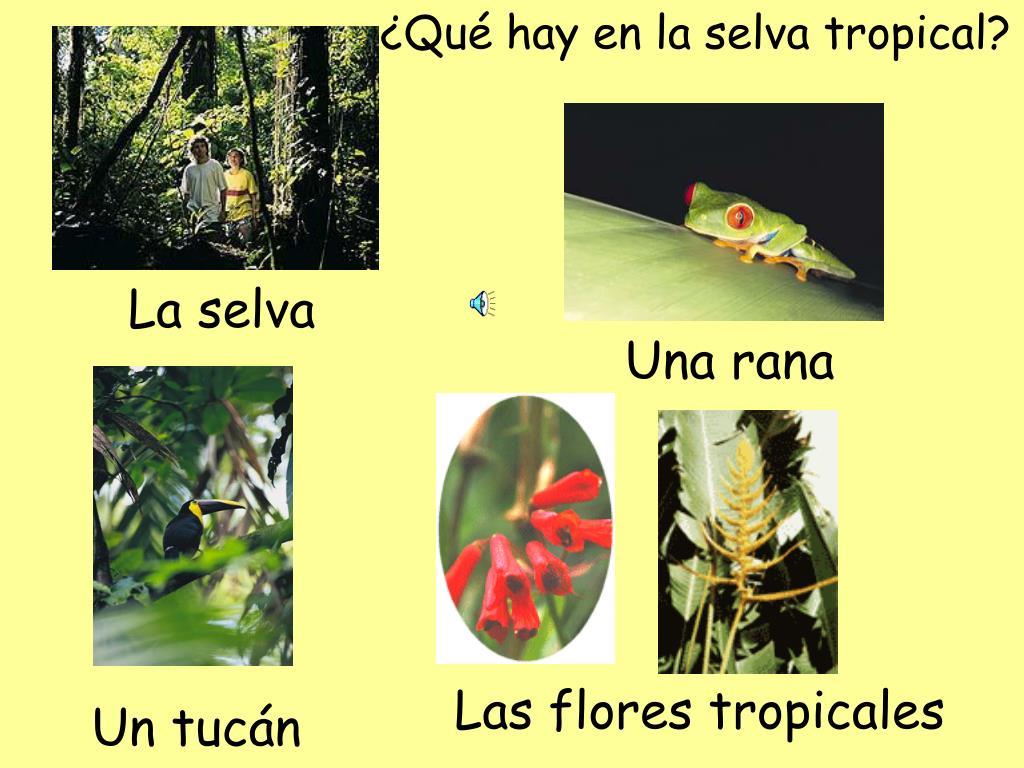 ¿Qué hay en la selva tropical?