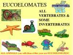 eucoelomates