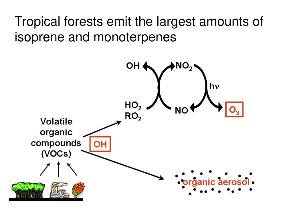Tropical forests emit the largest amounts of isoprene and monoterpenes