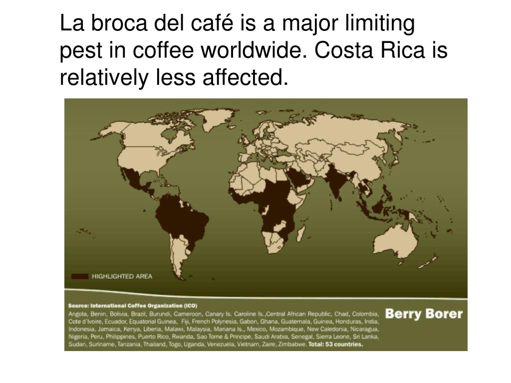 La broca del café is a major limiting pest in coffee worldwide. Costa Rica is relatively less affected.