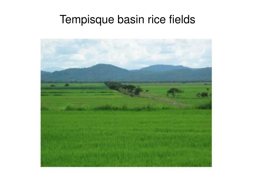 Tempisque basin rice fields