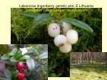 labanoras lingonberry genetic plot e lithuania vaccinium vitis idaea var leucocarpum
