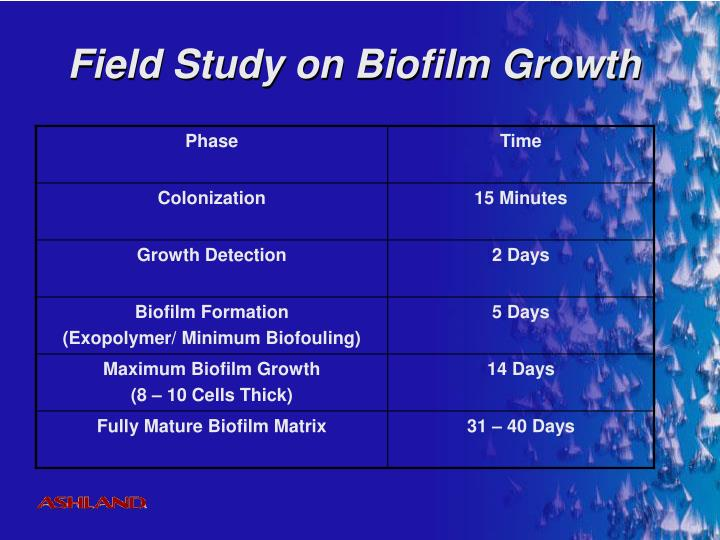 Field Study on Biofilm Growth