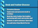 beak and feather disease
