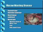 macaw wasting disease
