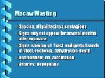 macaw wasting