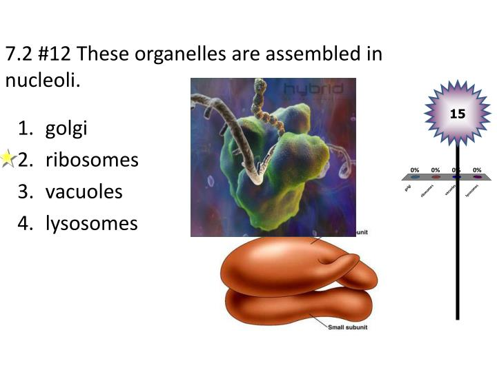 7.2 #12 These organelles are assembled in