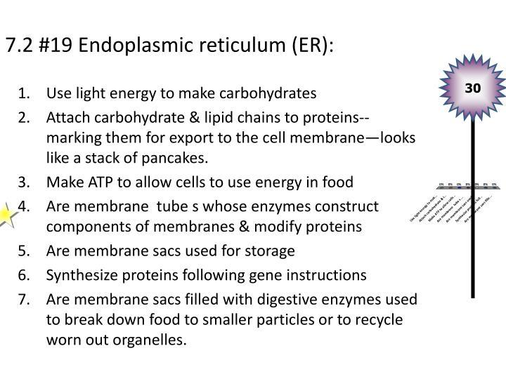 7.2 #19 Endoplasmic reticulum (ER):