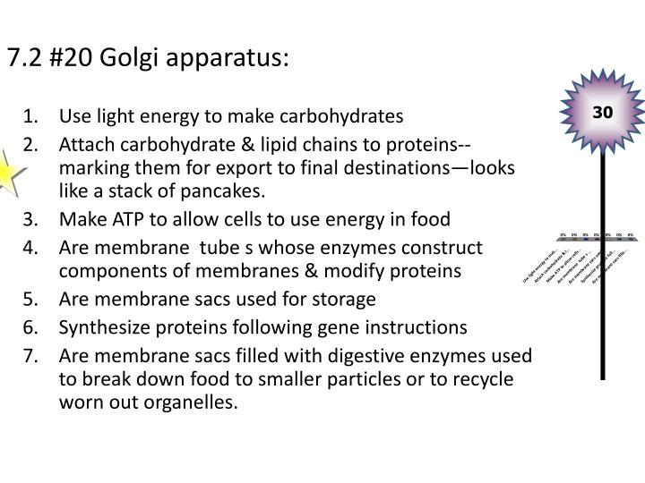 7.2 #20 Golgi apparatus: