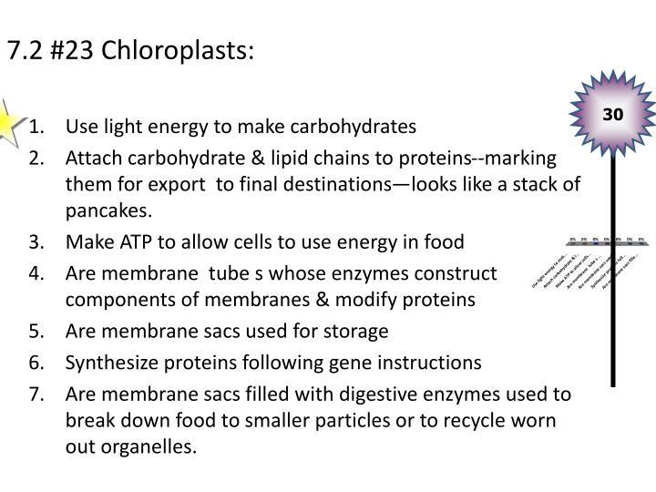 7.2 #23 Chloroplasts: