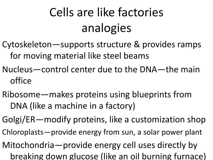 Cells are like factories