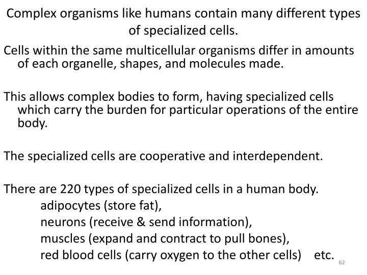 Complex organisms like humans contain many different types of specialized cells.