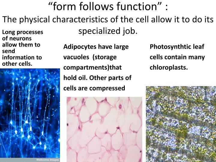 """form follows function"" :"